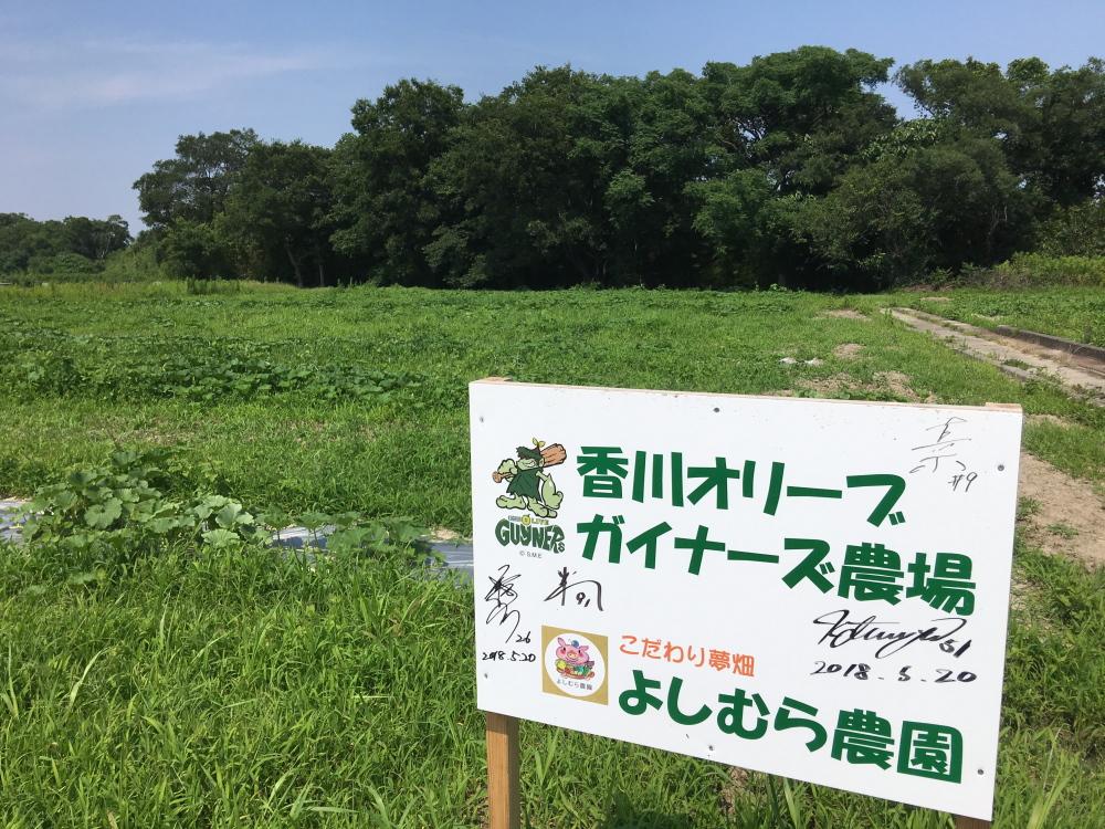 香川オリーブガイナーズ農場