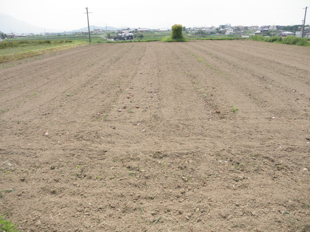 耕耘の終わった畑